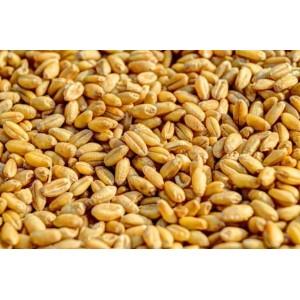 Пшениця Дурум (твердих сортів) 1 кг